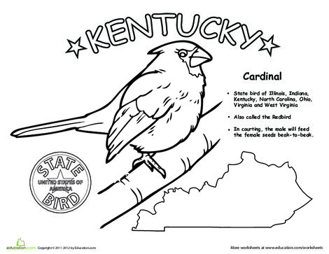First Grade Coloring Worksheets: Kentucky State Bird