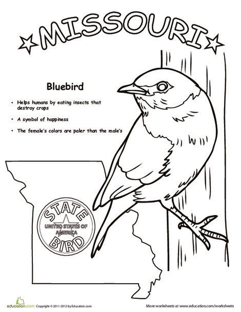 First Grade Coloring Worksheets: Missouri State Bird