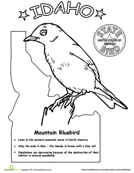 First Grade Coloring Worksheets: Idaho State Bird