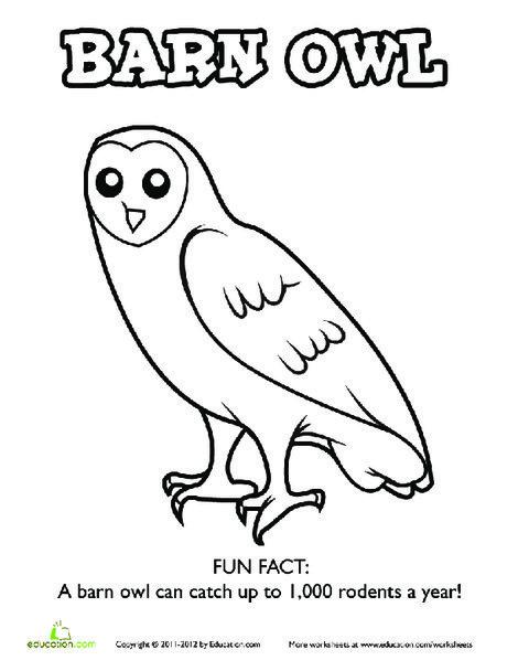 Kindergarten Coloring Worksheets: Barn Owl Coloring Page