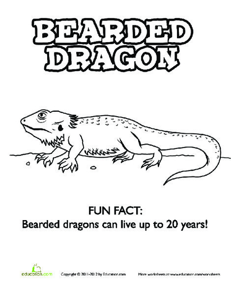 Kindergarten Coloring Worksheets: Bearded Dragon Coloring Page