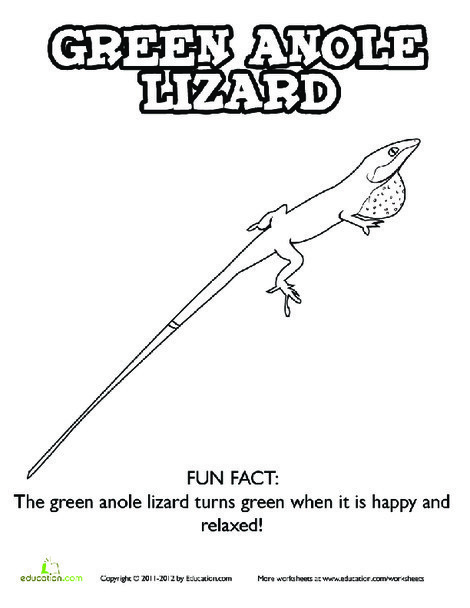 Kindergarten Coloring Worksheets: Lizard Coloring Page