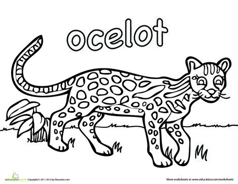 First Grade Coloring Worksheets: Ocelot Coloring Page