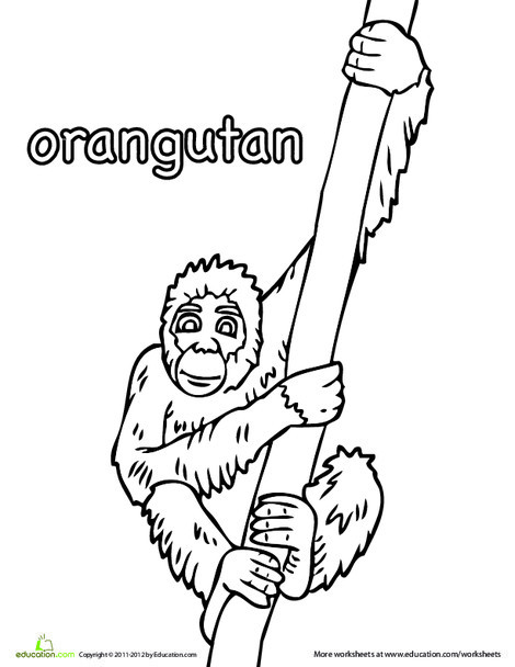 Kindergarten Coloring Worksheets: Color the Orangutan