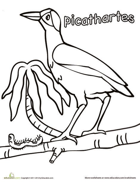 Kindergarten Coloring Worksheets: Color the Picathartes