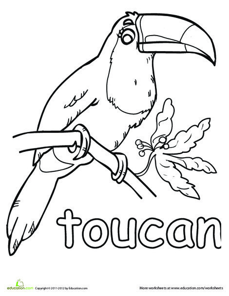 Kindergarten Coloring Worksheets: Toucan Coloring Page