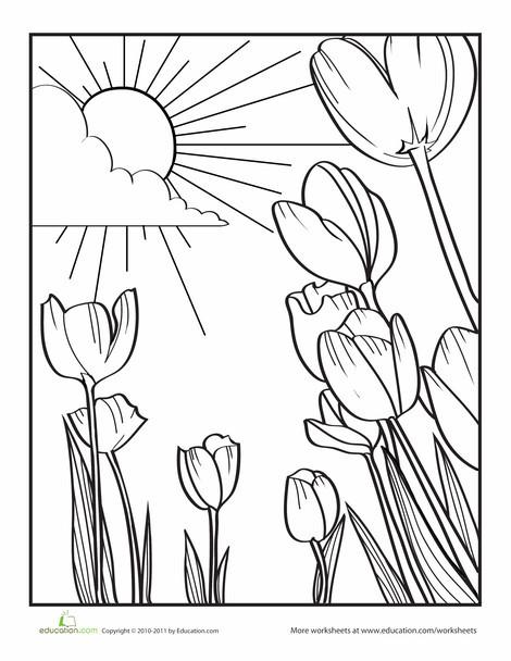 Preschool Coloring Worksheets: Tulip Coloring Page