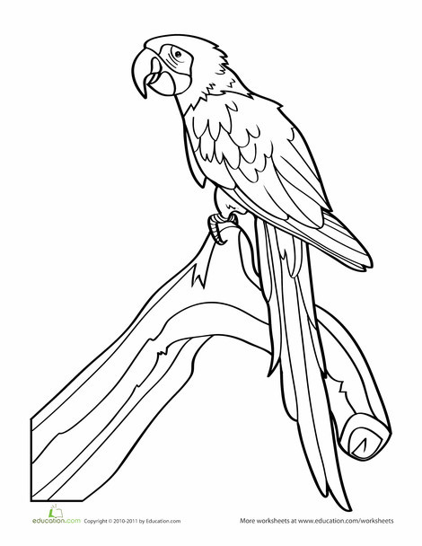 Preschool Coloring Worksheets: Parrot Coloring Page
