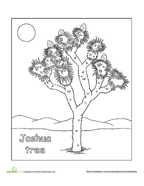 Second Grade Coloring Worksheets: Color a Joshua Tree