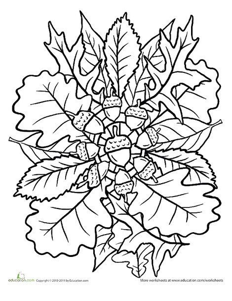 Second Grade Coloring Worksheets: Oak Tree Coloring Page: Mandala