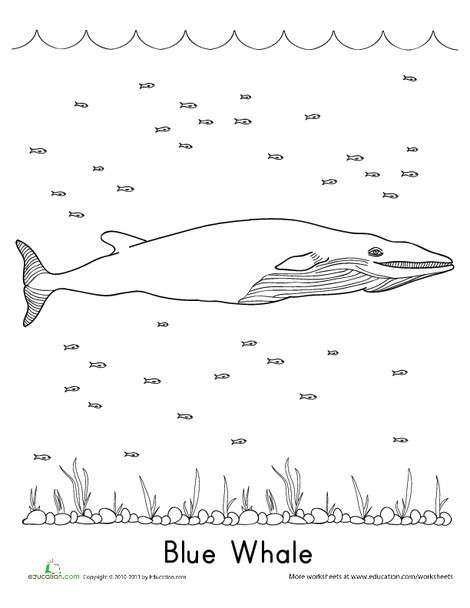 First Grade Coloring Worksheets: Blue Whale Coloring Page