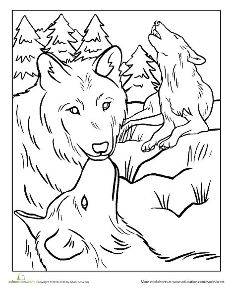 First Grade Coloring Worksheets: Wolf Pack Coloring Page