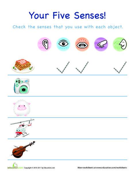 Preschool Science Worksheets: The Five Senses!
