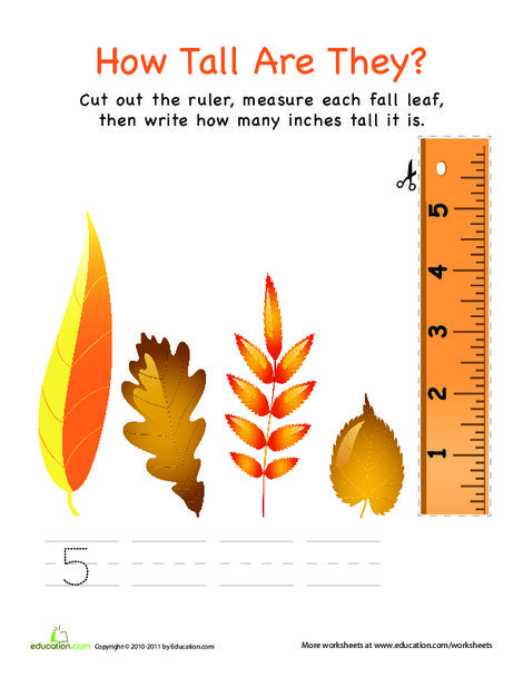 First Grade Math Worksheets: How Tall Are They: Leaves!