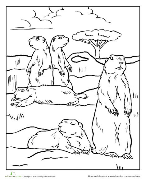Kindergarten Coloring Worksheets: Color the Prairie Dogs