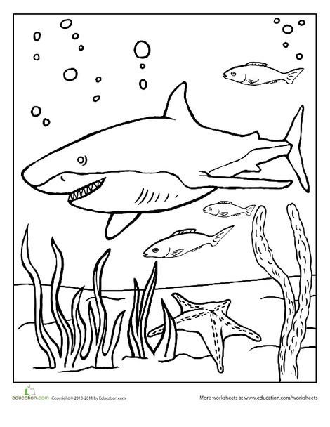 Kindergarten Coloring Worksheets: Color the Grinning Shark