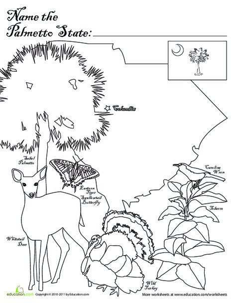 First Grade Social studies Worksheets: Palmetto State