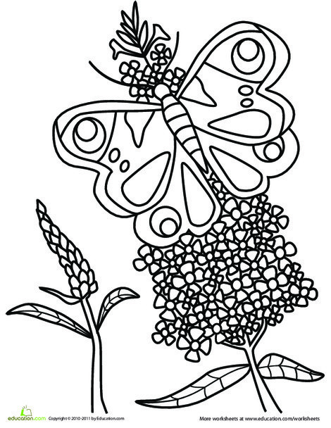 Kindergarten Coloring Worksheets: Beautiful Butterfly Coloring Page