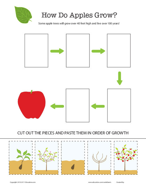 Second Grade Science Worksheets: How Does It Grow? Apple Tree