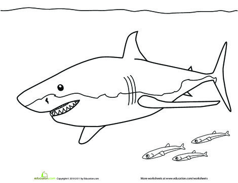 Preschool Coloring Worksheets: Color the Great White Shark
