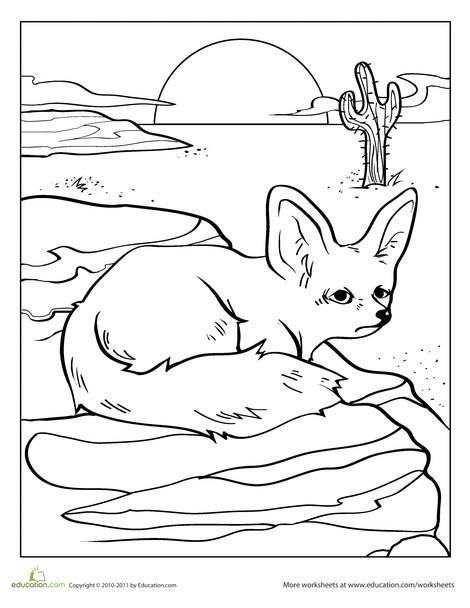 Preschool Coloring Worksheets: Color the Desert Fox