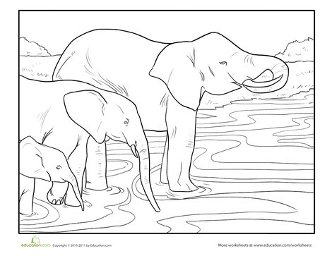 First Grade Coloring Worksheets: Color the Wading Elephants
