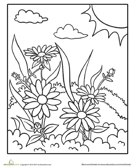 Kindergarten Coloring Worksheets: Daisy Coloring Page