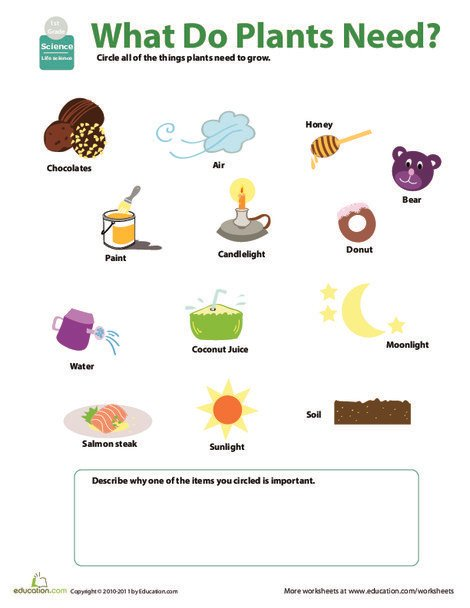 First Grade Science Worksheets: What Do Plants Need?