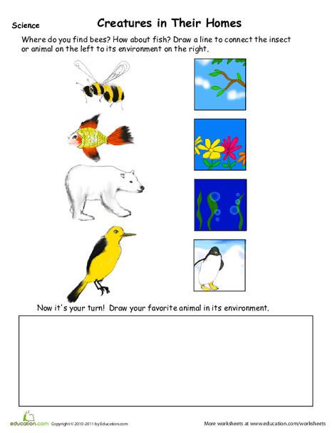 Kindergarten Science Worksheets: Animal Habitat Drawing Page