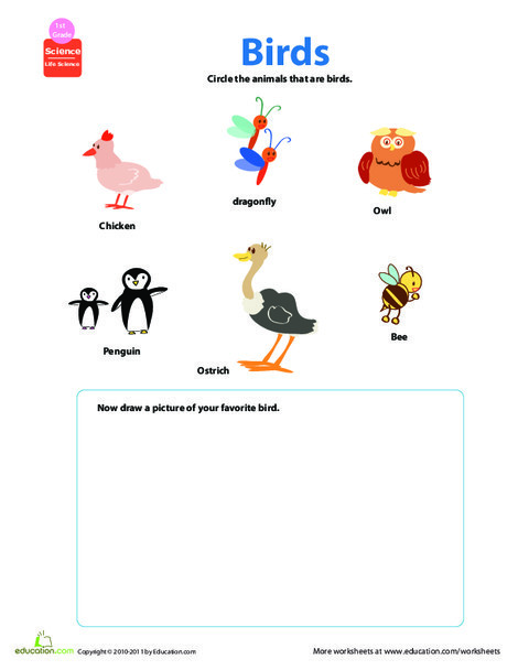 First Grade Science Worksheets: Critter Classification: Birds