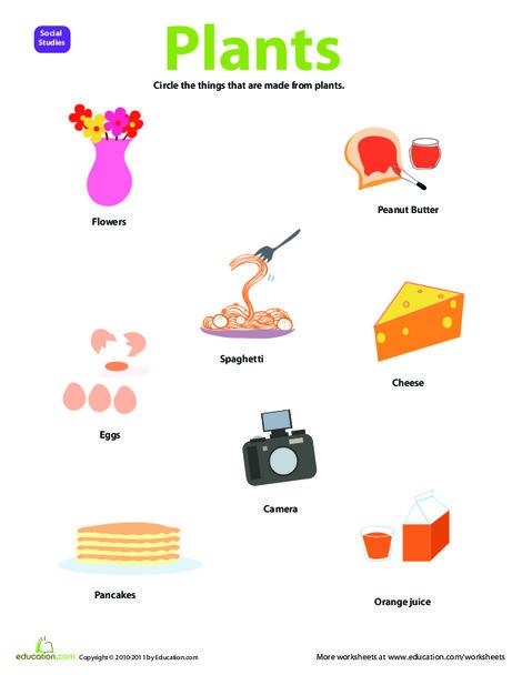 Preschool Science Worksheets: Resource: Plants