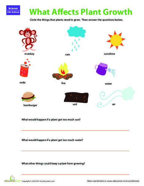 Second Grade Science Worksheets: Plant Matters: What Plants Need