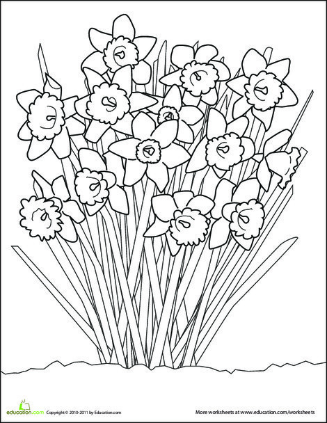 First Grade Coloring Worksheets: Daffodil Coloring Page
