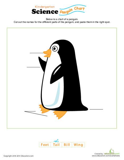 Kindergarten Science Worksheets: Penguin Anatomy Diagram