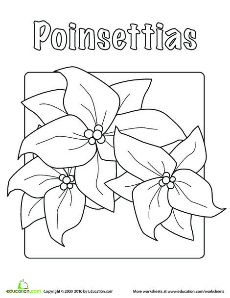 Kindergarten Holidays Worksheets: Poinsettia Coloring Page