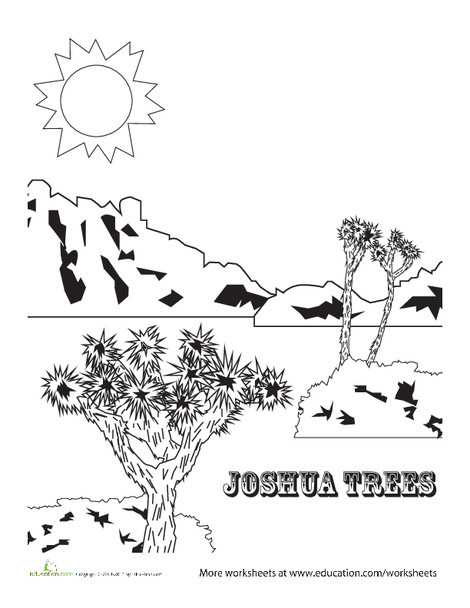 First Grade Coloring Worksheets: Joshua Tree Coloring Page