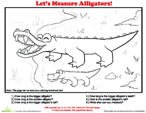 Second Grade Math Worksheets: How to Measure: Alligator