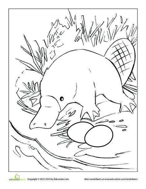 Kindergarten Coloring Worksheets: Platypus Coloring Page