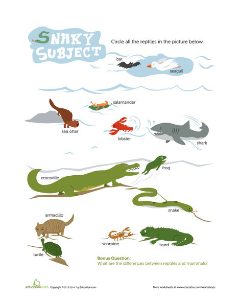 Third Grade Science Worksheets: Reptile Recognition